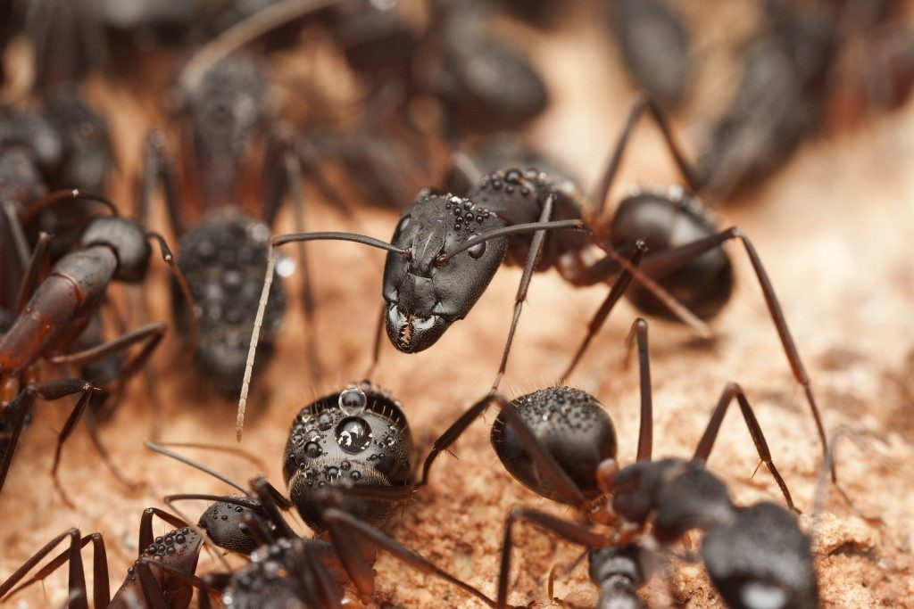 close up picture of ants