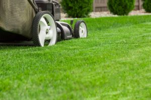 lawn mower and grass