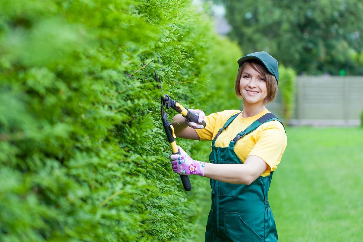trimming the shrubs